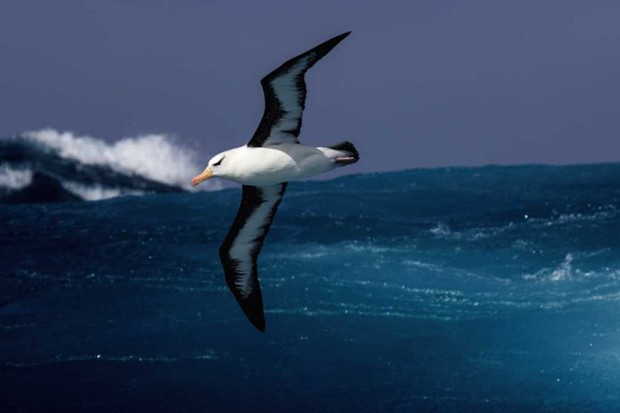Five incredible journeys by seabirds (and some unusual underwater behaviour) © Getty Images