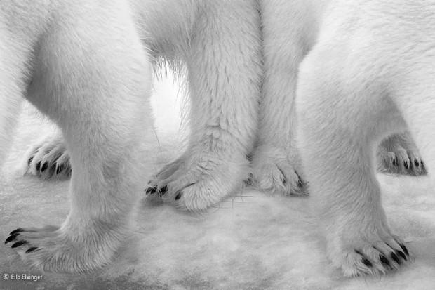 © Eilo Elvinger/Wildlife Photographer of the Year