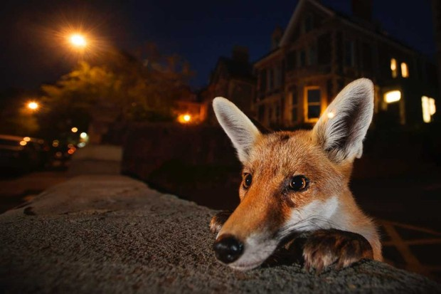 © Sam Hobson/Wildlife Photographer of the Year