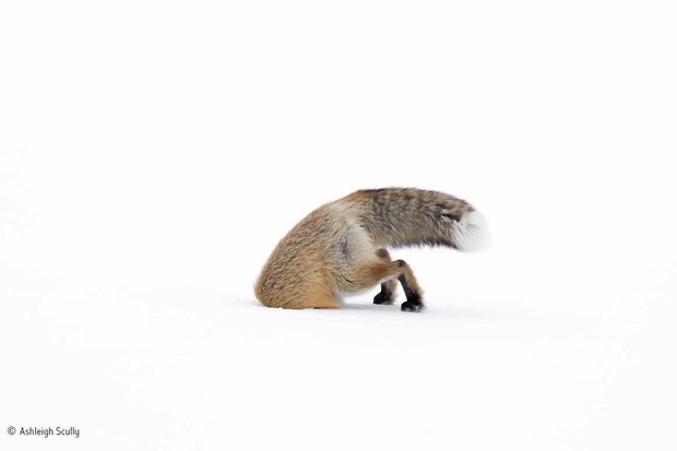 © Ashleigh Scully/Wildlife Photographer of the Year