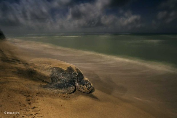 © Brian Skerry/Wildlife Photographer of the Year