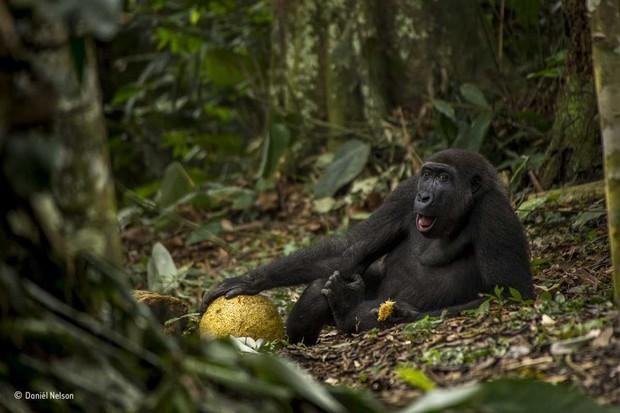 © Daniël Nelson/Wildlife Photographer of the Year