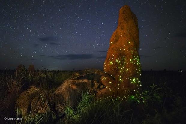© Marcio Cabral/Wildlife Photographer of the Year