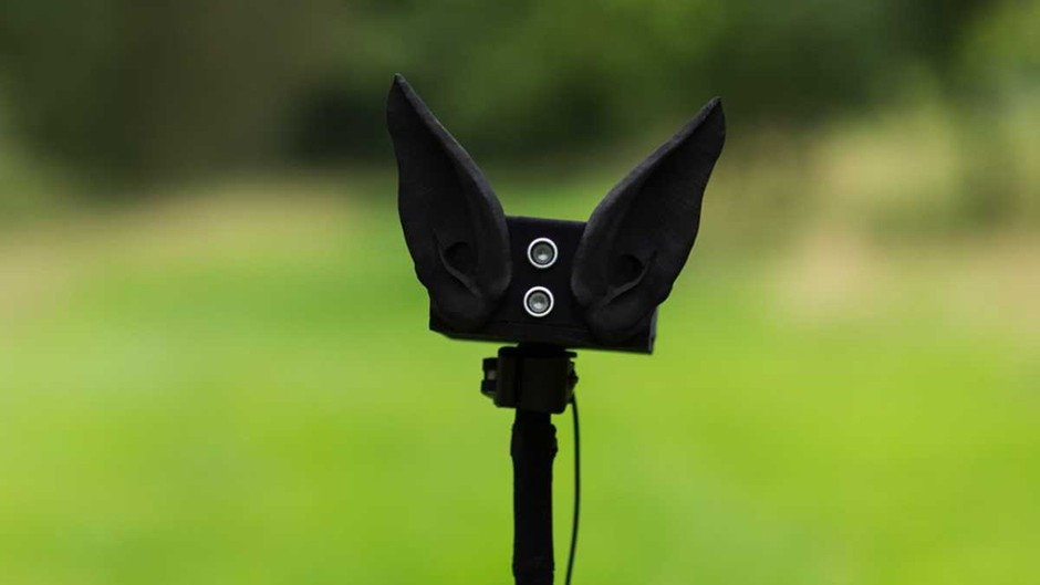 Through the Ears of the Bats © MLF