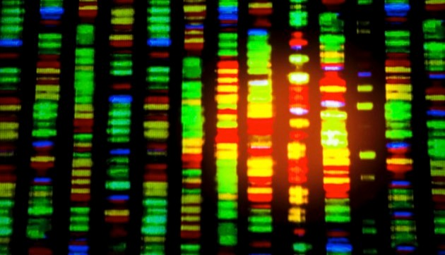 Human gene code; each colour represents a nucleotide base © iStock