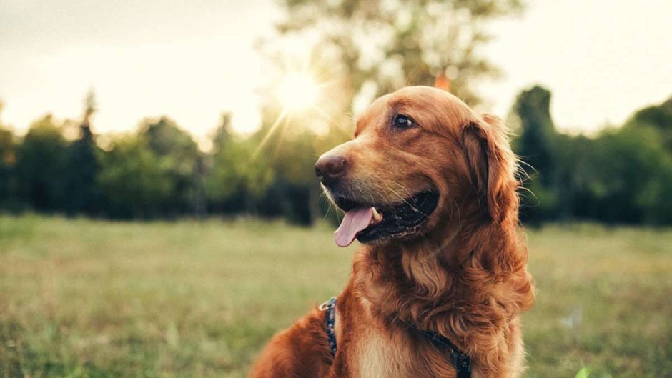 Ancient dogs domesticated twice ©iStock
