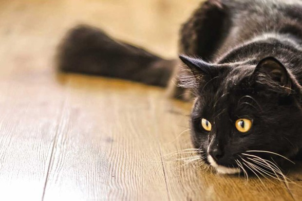 Cats understand the laws of physics and cause-and-effect © iStock