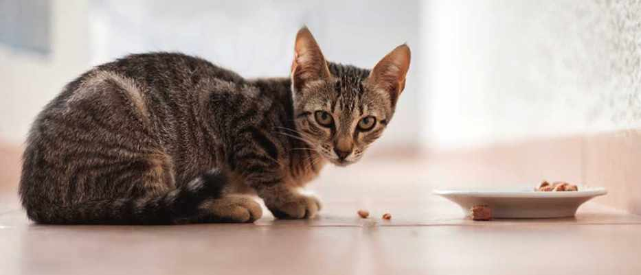 Why cats are fussy eaters but dogs will consume almost anything © iStock