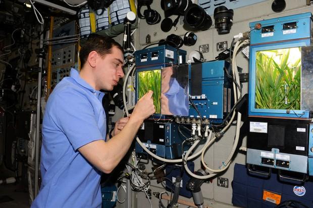 Learning to grow © NASA