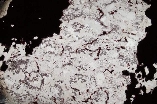 Filament microfossils © Matthew Dodd