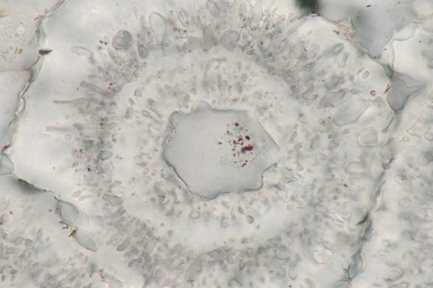 Quartz crystal with nanoscopic inclusions that may have formed from organic matter © Matthew Dodd