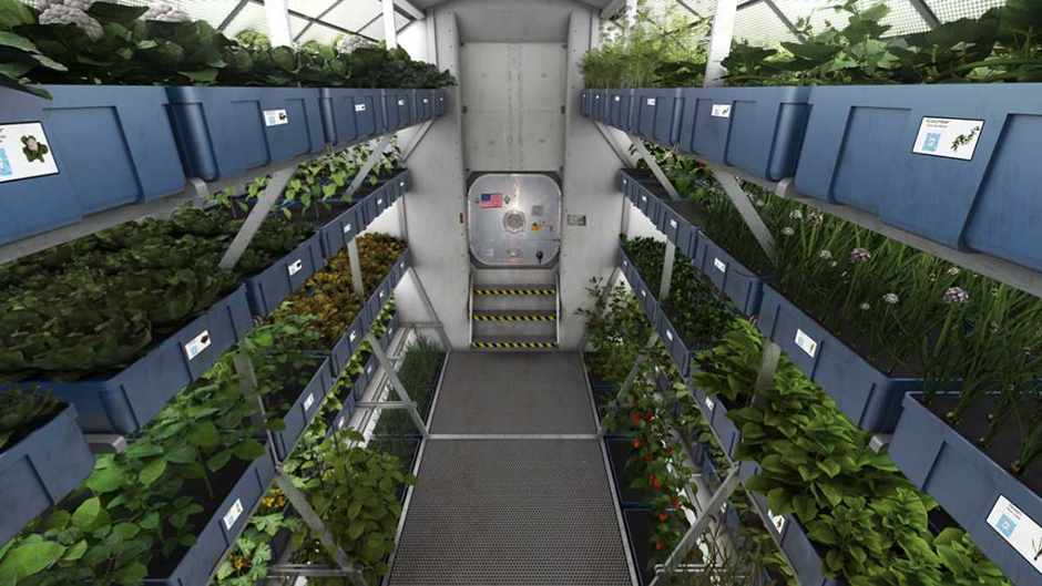 Interstellar greenhouses: how a single molecule could be key to growing plants in microgravity © NASA