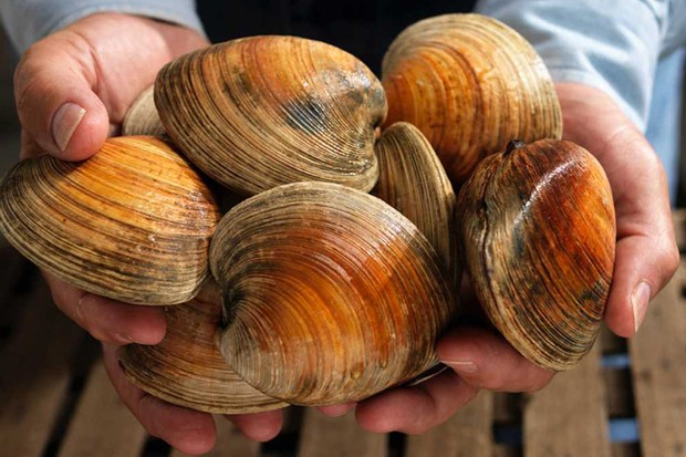 Long-lived clams reveal secrets of oceans past © Getty Images
