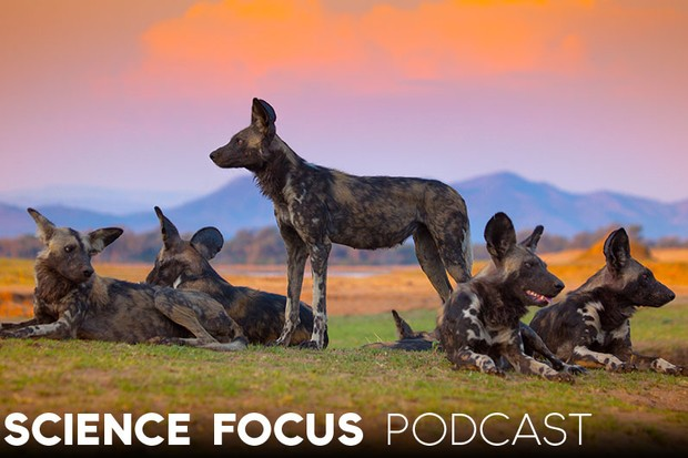 Science Focus Podcast: Filming a Dynasty © BBC/Nick Lyon