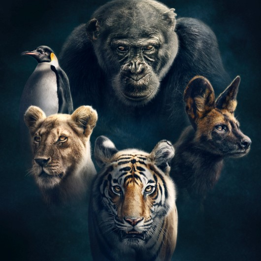 Watch the latest episode of Dynasties on BBC Onem, Sundays at 20:00, or catch up on the whole series on BBC iPlayer © BBC