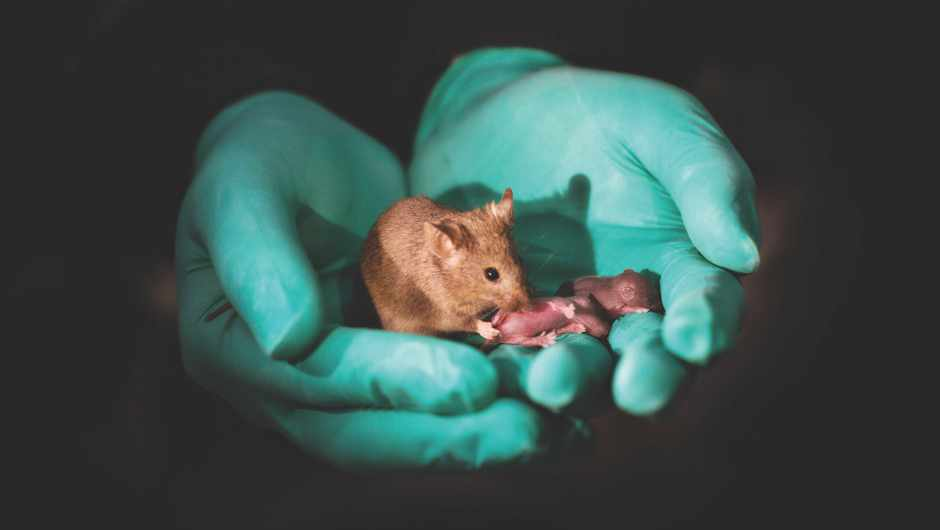 Defect-free Mice born from same-sex parents © Leyun Wang