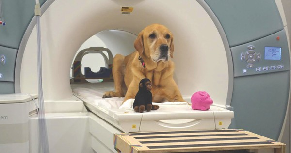 Brain scan study reveals how dogs respond to language