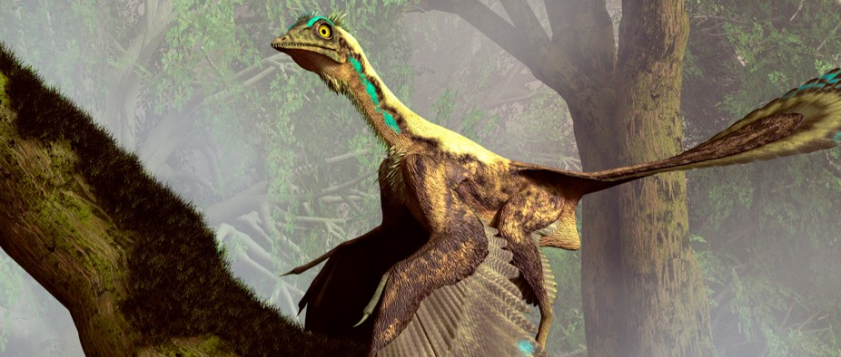 Dinosaur fossil could be the world's first-ever bird ...