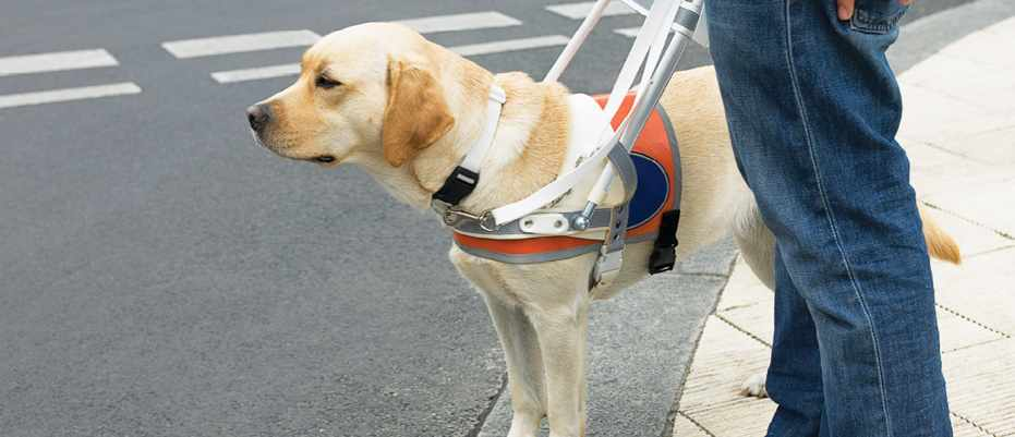 Do guide dogs know that their master is blind? © Getty Images