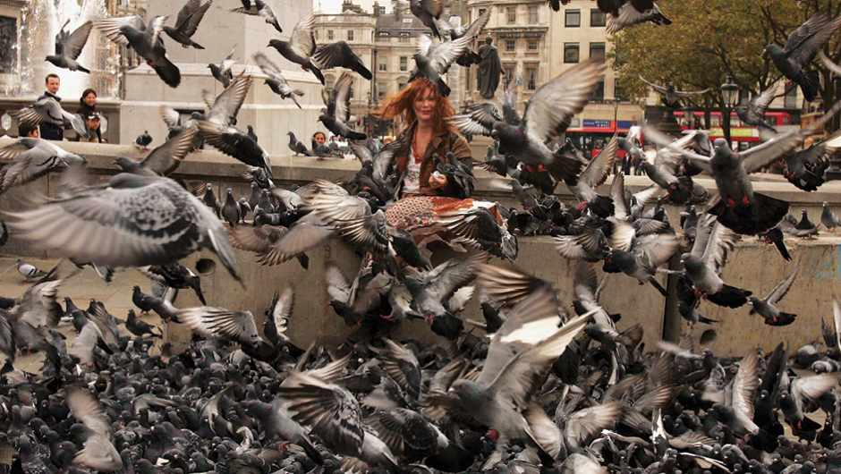 Why are pigeons such a successful city bird? © Getty Images