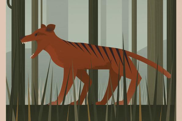 tasmania-thylacine
