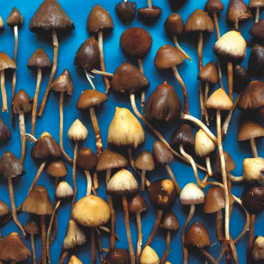 Magic mushrooms © Getty Images