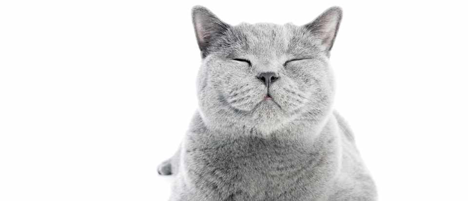 Can cats smile? © Getty Images
