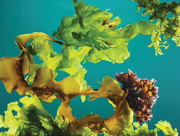Seaweed, see the possibilities © Alamy