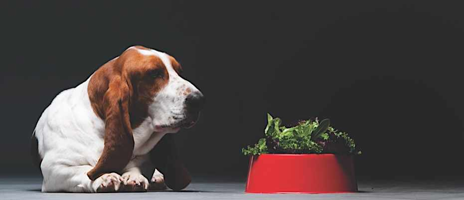 Can I raise my dog or cat as a vegan?