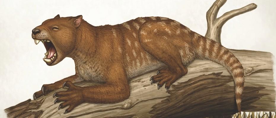 Skeleton of Australia's marsupial lion rebuilt - BBC ...