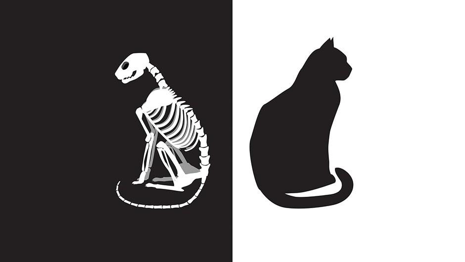 What is Schrödinger's Cat? © Getty Images