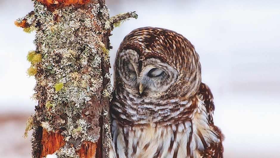 Where do birds sleep? © Getty Images