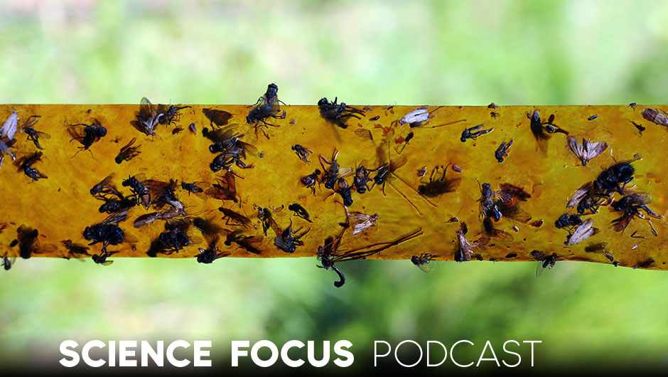 Are we facing an insect apocalypse? – Brad Lister