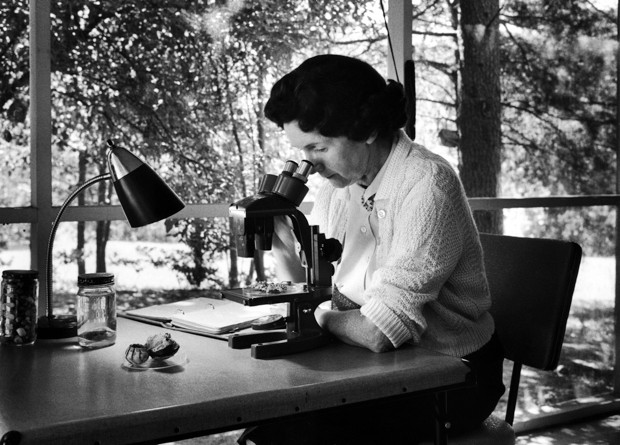 Biologist and author Rachel Carson peering through a microscope at home © Alfred Eisenstaedt/The LIFE Picture Collection/Getty Images
