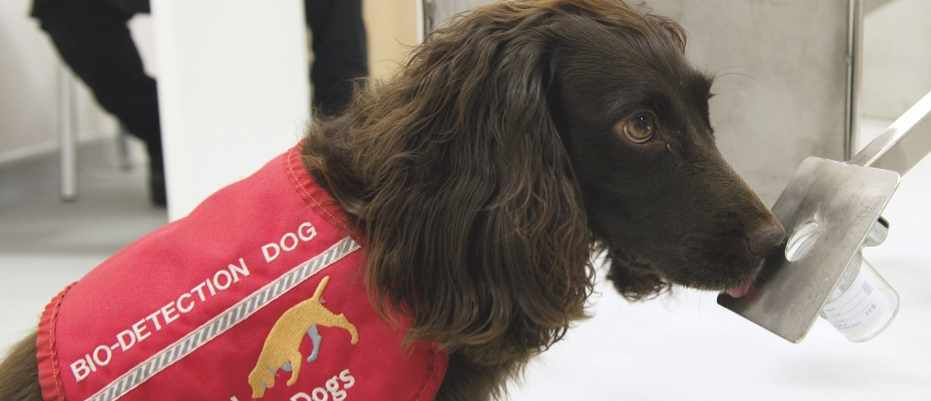 Medical detection dogs can sniff out diabetes