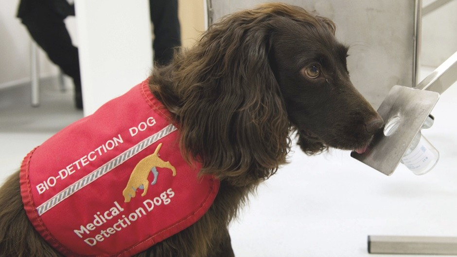 Medical detection dogs can sniff out diabetes © Shutterstock