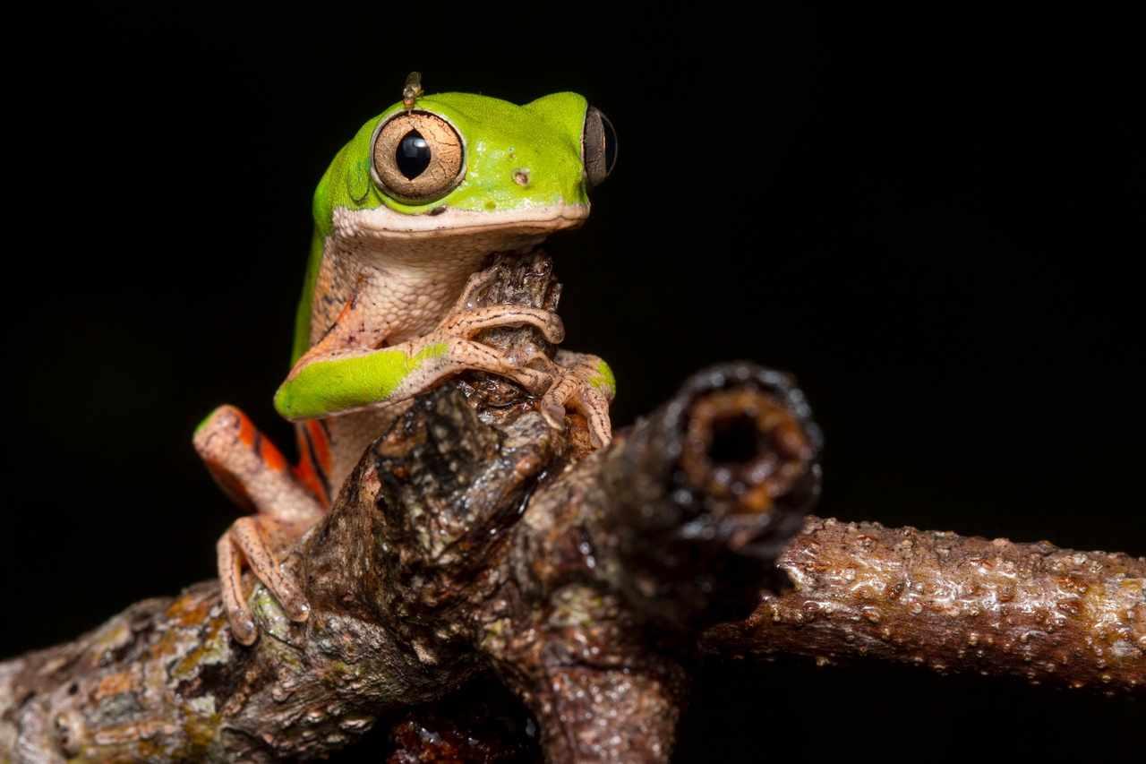 © Jorge Enrique García Melo (Grupo de Investigación en Zoología, Universidad del Tolima)