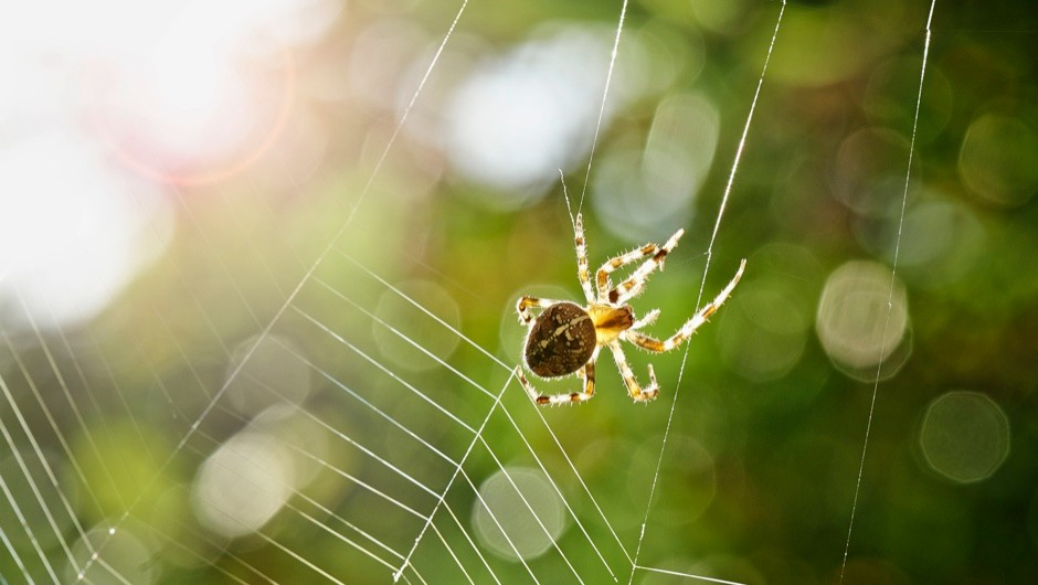 Spider silk could be used to make robotic muscles © Getty Images