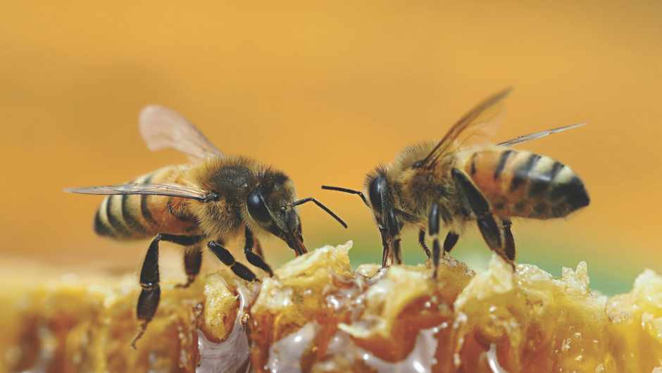 GettyImages © Am I helping or hindering the bee population by eating honey?