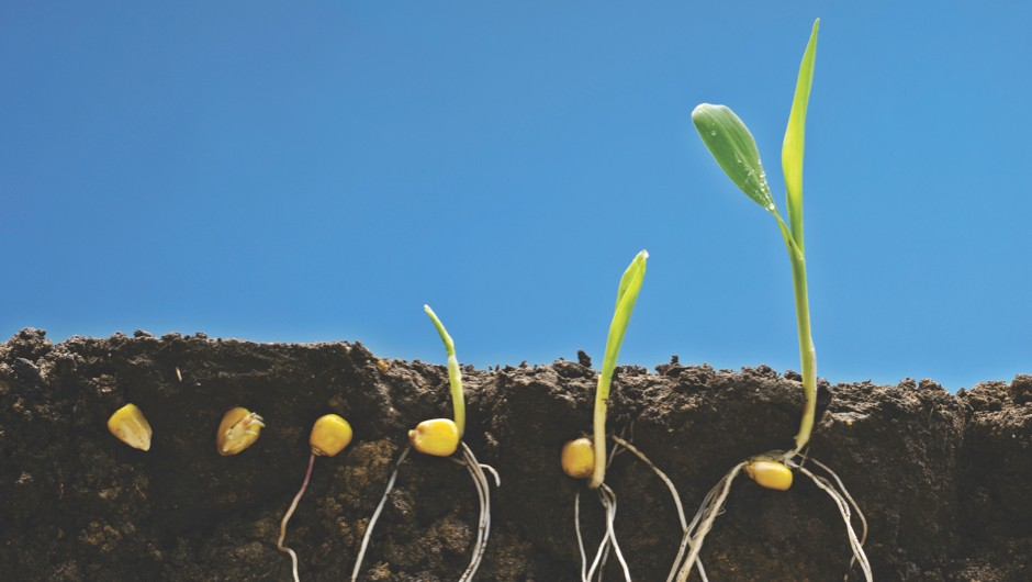 Getty © Which came first, the plant or the seed?