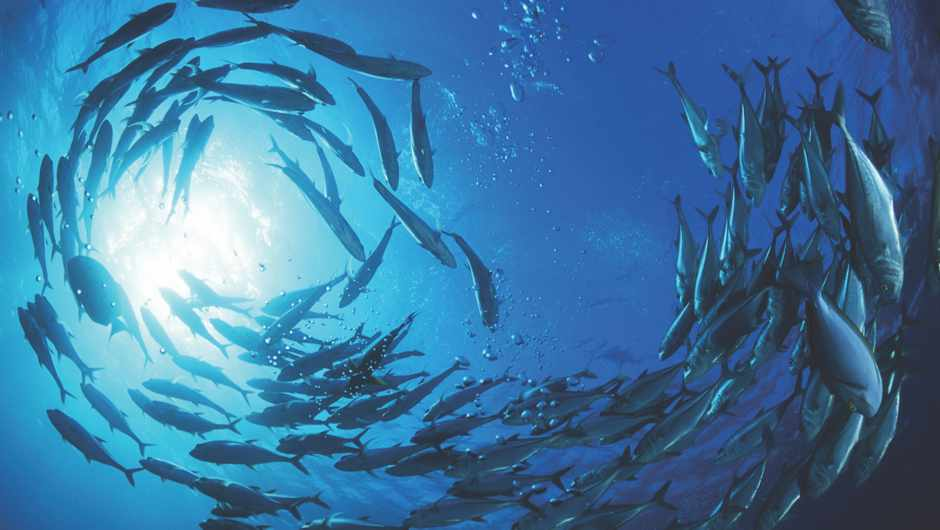 What's the difference between a shoal, a school and a pod?