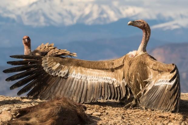 14 amazing photos from the BMC Ecology Image Competition 2018 © Pilar Oliva Vidal (University of Lleida – ETSEA, Spain)