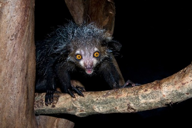 What is an aye-aye? © Getty Images