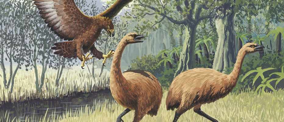Has an animal ever evolved itself into extinction? © PLOS Biology/Wikipedia