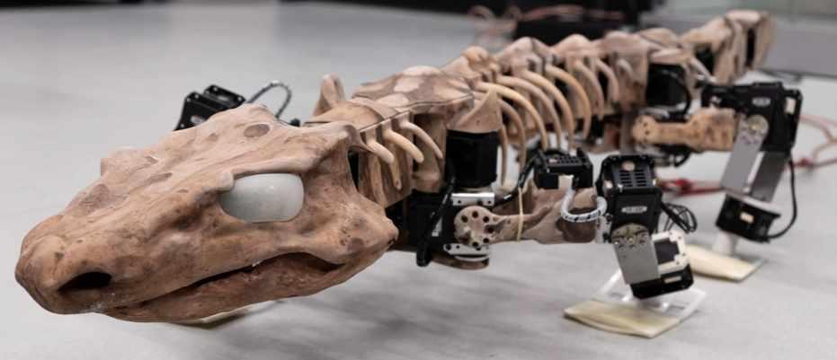 The walk of prehistoric life