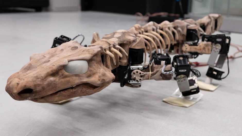 The walk of prehistoric life © Tomislav Horvat (EPFL Lausanne), Kamilo Melo (EPFL Lausanne)