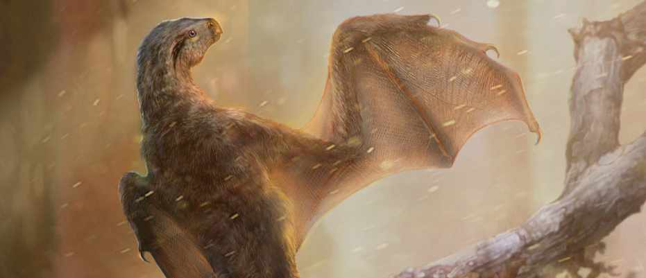 Tiny, bat-winged dinosaur sheds light on the origin of flight © Chung-Tat Cheung