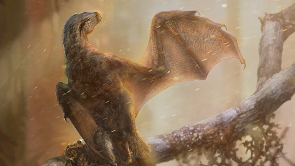 Tiny, bat-winged dinosaur sheds light on the origin of flight © Chung-Tat Cheung