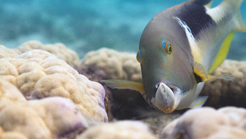 Five of Earth's most innovative animals that use tools © Lucy Hockings/BBC