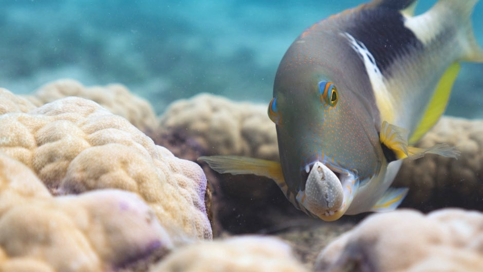 Five of Earth's most innovative animals that use tools